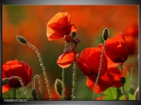 Glas schilderij Klaproos | Rood, Groen