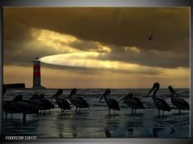 Glas schilderij Vogels | Geel, Zwart, Wit
