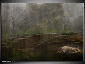 Foto canvas schilderij Wolf | Groen, Grijs