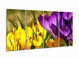 Glas schilderij Krokus | Geel, Paars, Groen | 160x80cm 4Luik