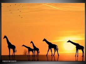 Foto canvas schilderij Giraffes | Oranje, Geel, Zwart