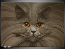 Foto canvas schilderij Kat | Grijs, Bruin, Wit