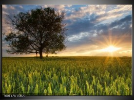Foto canvas schilderij Landschap   Wit, Blauw, Groen