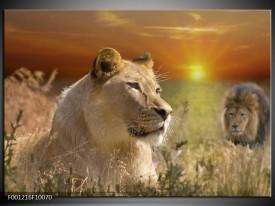 Glas schilderij Leeuw | Geel, Oranje, Crème