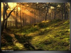 Glas schilderij Natuur | Geel, Groen