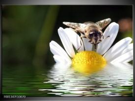 Glas schilderij Natuur | Geel, Wit, Grijs