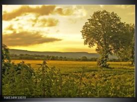 Glas schilderij Natuur | Grijs, Groen, Geel