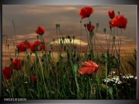 Glas schilderij Klaproos | Rood, Groen, Grijs