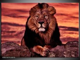 Foto canvas schilderij Leeuw | Paars, Bruin, Zwart