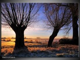 Foto canvas schilderij Natuur | Zwart, Blauw, Geel