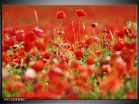 Foto canvas schilderij Klaproos | Groen, Rood,