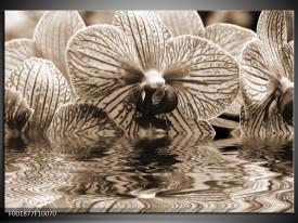 Glas schilderij Orchidee   Sepia, Bruin