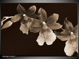 Foto canvas schilderij Bloem | Sepia, Bruin