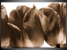 Foto canvas schilderij Tulpen | Sepia, Bruin