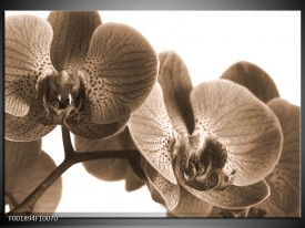 Glas schilderij Orchidee | Sepia
