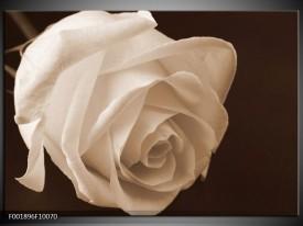 Glas schilderij Roos | Sepia, Bruin