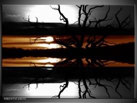 Glas schilderij Bomen | Sepia, Bruin