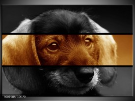 Foto canvas schilderij Hond | Sepia, Bruin