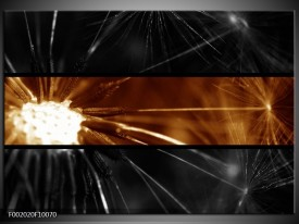 Glas schilderij Macro | Sepia, Bruin