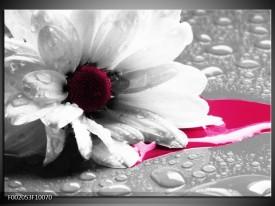 Foto canvas schilderij Bloem | Grijs, Wit, Roze