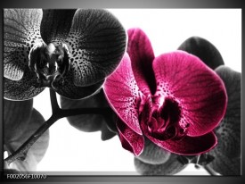 Foto canvas schilderij Orchidee | Zwart, Wit, Roze