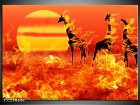 Glas schilderij Dieren | Zwart, Oranje, Geel