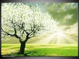 Foto canvas schilderij Boom   Groen, Wit, Zwart