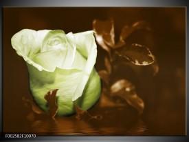 Glas schilderij Bloem | Wit, Bruin, Groen