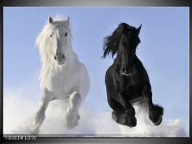 Foto canvas schilderij Paarden | Wit, Zwart, Blauw