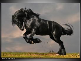 Foto canvas schilderij Paarden | Zwart, Wit, Grijs