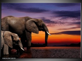 Foto canvas schilderij Olifant | Grijs, Oranje, Paars