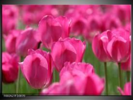Foto canvas schilderij Tulp | Roze, Groen