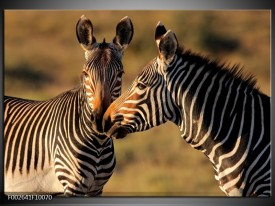 Glas schilderij Zebra   Zwart, Wit, Bruin