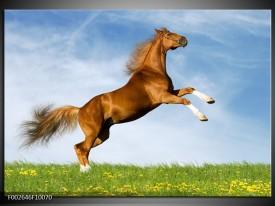 Glas schilderij Paard   Bruin, Blauw, Wit