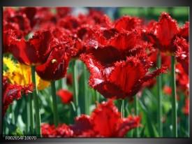Glas schilderij Tulp   Rood, Groen, Geel