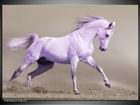 Glas schilderij Paard   Paars, Grijs