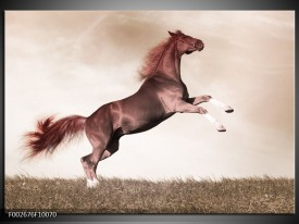 Foto canvas schilderij Paard | Sepia, Bruin, Rood