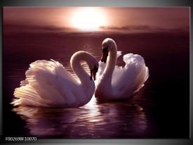 Foto canvas schilderij Vogels | Wit, Bruin, Zwart