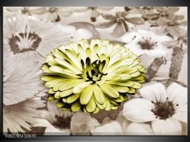 Foto canvas schilderij Gerbera | Groen, Sepia