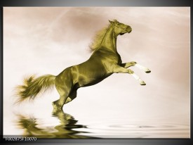Glas schilderij Paard | Groen, Goud, Sepia