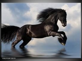 Glas schilderij Paard | Zwart, Blauw, Wit
