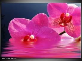 Glas schilderij Orchidee   Paars, Wit, Blauw