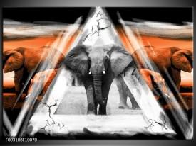 Foto canvas schilderij Olifant | Oranje, Wit, Grijs