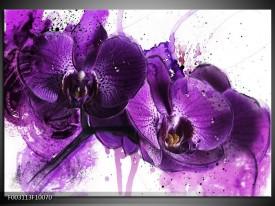 Foto canvas schilderij Orchidee   Paars, Wit, Zwart