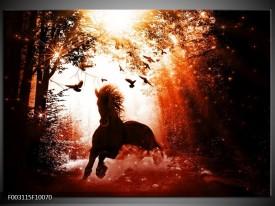 Glas schilderij Paard   Rood, Zwart, Wit