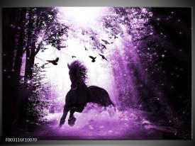 Foto canvas schilderij Paard | Paars, Zwart, Wit
