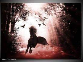 Foto canvas schilderij Paard   Rood, Zwart, Wit