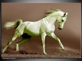 Foto canvas schilderij Paard | Bruin, Groen