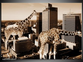 Glas schilderij Giraffe | Bruin, Wit