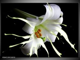 Foto canvas schilderij Bloem | Wit, Zwart, Groen